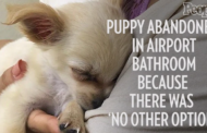 Puppy Abandoned in Airport Bathroom with Devastating Note