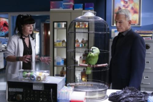 Celebrity apprentice season 3 episode guide